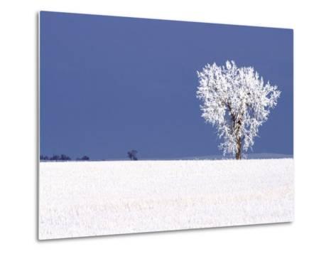 Hoar Frost Covers Tree, North Dakota, USA-Chuck Haney-Metal Print