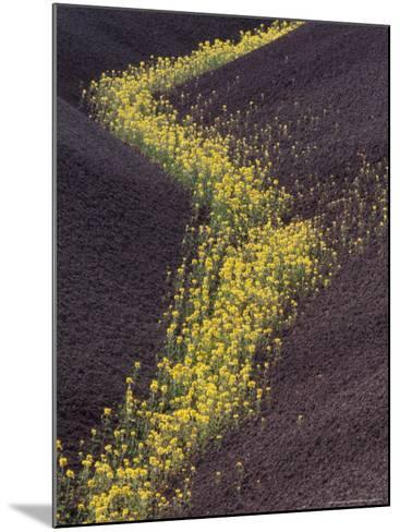 Yellow Flowers Follow Streambed in Painted Hills National Monument, Oregon, USA-Darrell Gulin-Mounted Photographic Print
