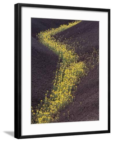 Yellow Flowers Follow Streambed in Painted Hills National Monument, Oregon, USA-Darrell Gulin-Framed Art Print