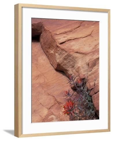 Paintbrush with Entrada Sandstone Along Zion-Mt. Carmel Highway, Zion National Park, Utah, USA--Framed Art Print