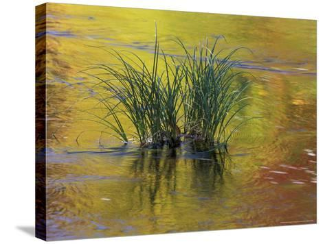 Tuft of Grass in Deerfield River, Green Mountain National Forest, Vermont, USA-Adam Jones-Stretched Canvas Print