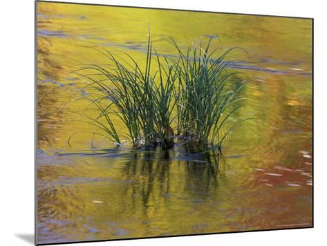Tuft of Grass in Deerfield River, Green Mountain National Forest, Vermont, USA-Adam Jones-Mounted Photographic Print