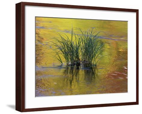 Tuft of Grass in Deerfield River, Green Mountain National Forest, Vermont, USA-Adam Jones-Framed Art Print