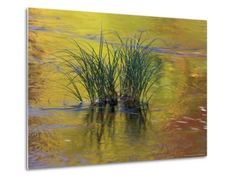 Tuft of Grass in Deerfield River, Green Mountain National Forest, Vermont, USA-Adam Jones-Metal Print