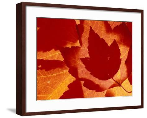 Maple Leaf Collage, Washington, USA--Framed Art Print