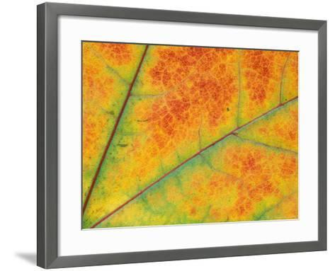 Fall Leaf Detail, Washington, USA--Framed Art Print