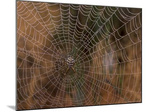Spider in Web, Washington, USA-Terry Eggers-Mounted Photographic Print