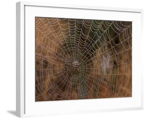 Spider in Web, Washington, USA-Terry Eggers-Framed Art Print