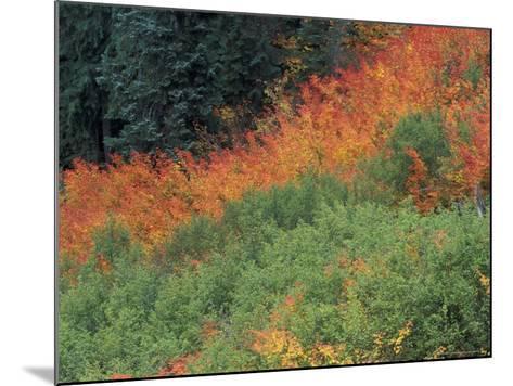 Autumn Color in the Mt. Rainier National Park, Washington, USA-William Sutton-Mounted Photographic Print