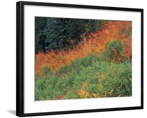 Autumn Color in the Mt. Rainier National Park, Washington, USA-William Sutton-Framed Art Print