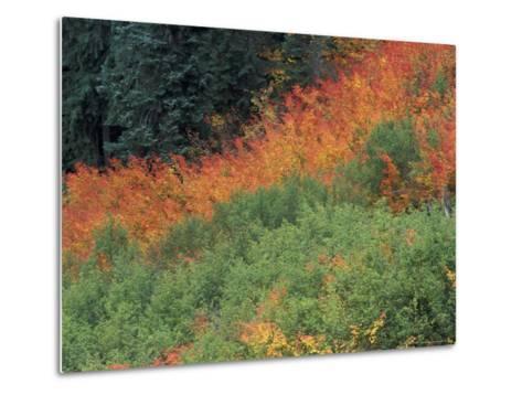 Autumn Color in the Mt. Rainier National Park, Washington, USA-William Sutton-Metal Print