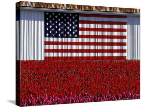 US Flag on Barn and Tulip Field, Skagit Valley, Washington, USA-William Sutton-Stretched Canvas Print
