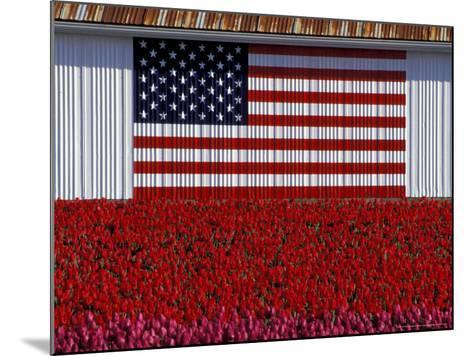 US Flag on Barn and Tulip Field, Skagit Valley, Washington, USA-William Sutton-Mounted Photographic Print