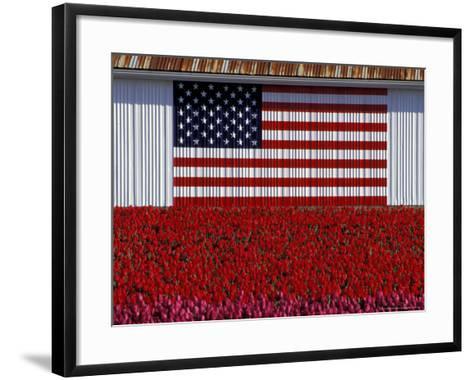 US Flag on Barn and Tulip Field, Skagit Valley, Washington, USA-William Sutton-Framed Art Print