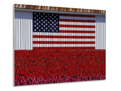 US Flag on Barn and Tulip Field, Skagit Valley, Washington, USA-William Sutton-Metal Print