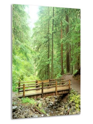 Trail Bridge, Upper Sol Duc Valley, Olympic National Park, Washington, USA--Metal Print