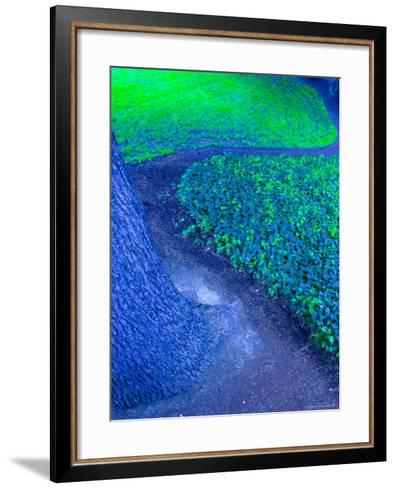 Abstract View of Tree and Grass, Seattle, Washington, USA--Framed Art Print