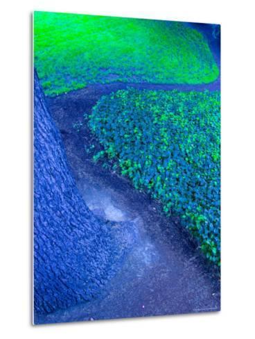Abstract View of Tree and Grass, Seattle, Washington, USA--Metal Print