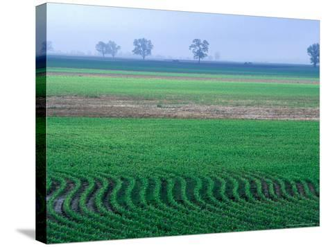 Spring Plowed Field of Crops-Gayle Harper-Stretched Canvas Print