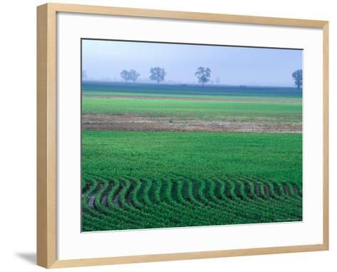 Spring Plowed Field of Crops-Gayle Harper-Framed Art Print