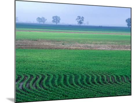 Spring Plowed Field of Crops-Gayle Harper-Mounted Photographic Print