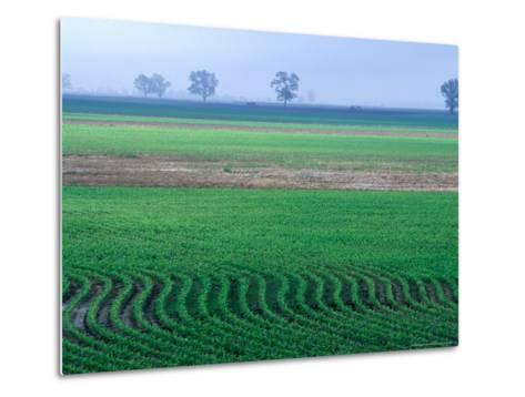Spring Plowed Field of Crops-Gayle Harper-Metal Print