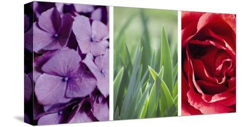Floral Triptych--Stretched Canvas Print