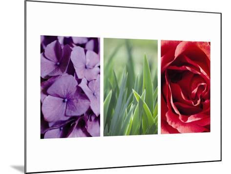 Floral Triptych--Mounted Photo