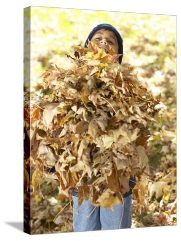 Little Boy Carrying Huge Pile of Leaves--Stretched Canvas Print