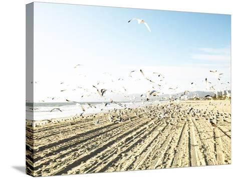 Flock of Seagulls Flying Across Water and Sand--Stretched Canvas Print