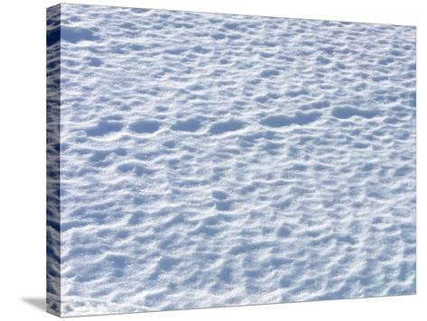 Footprints in the Snow--Stretched Canvas Print