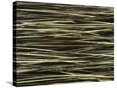 Close-up of Dark Paintbrush Bristles--Stretched Canvas Print