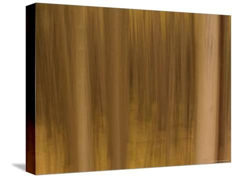 Panned View of a Forest in Autumn Colors-Raul Touzon-Stretched Canvas Print