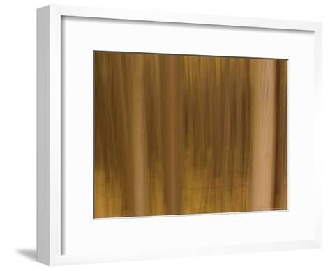 Panned View of a Forest in Autumn Colors-Raul Touzon-Framed Art Print