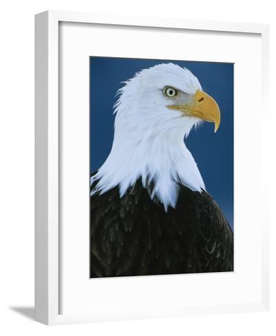 Portrait of an American Bald Eagle-Klaus Nigge-Framed Art Print