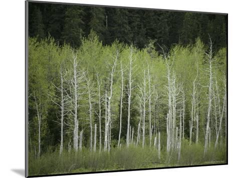 Woodland View in Alaska-Klaus Nigge-Mounted Photographic Print