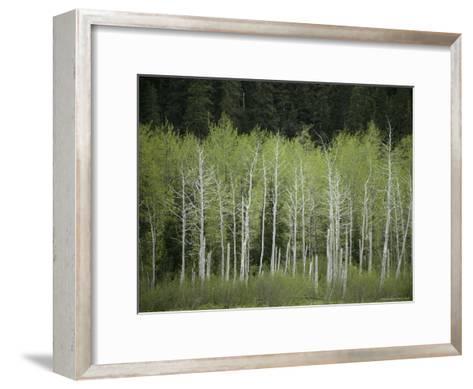 Woodland View in Alaska-Klaus Nigge-Framed Art Print