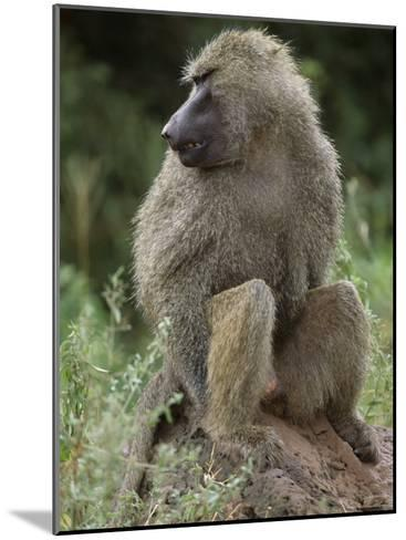 Close View of a Baboon in Profile-Richard Nowitz-Mounted Photographic Print