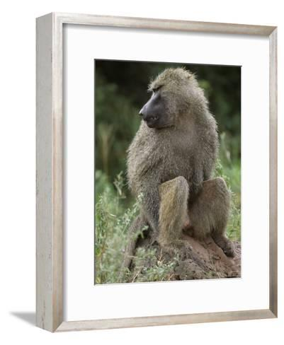 Close View of a Baboon in Profile-Richard Nowitz-Framed Art Print