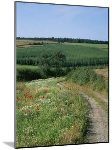 Dirt Road Running Past Hop Fields outside Munich-Taylor S^ Kennedy-Mounted Photographic Print