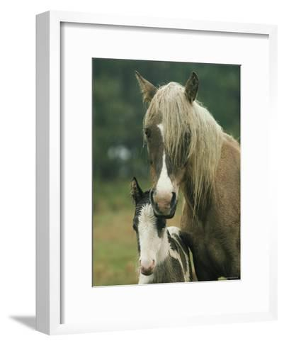 Portrait of a Wild Pony and her Foal-James L^ Stanfield-Framed Art Print