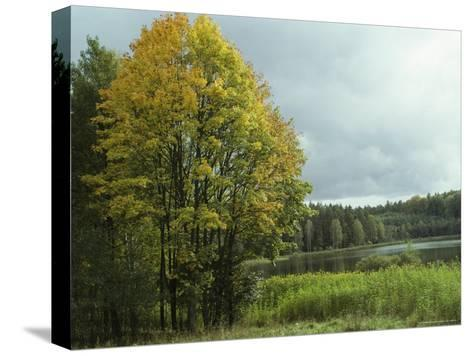 Cloud-Filled Sky over a Lake Surrounded by Trees-Klaus Nigge-Stretched Canvas Print