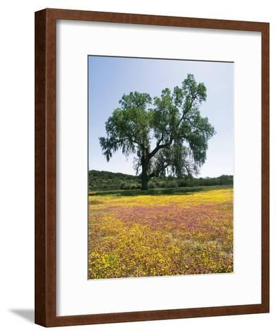 Lone Valley Oak Tree Stands in a Field of Owls Clover--Framed Art Print