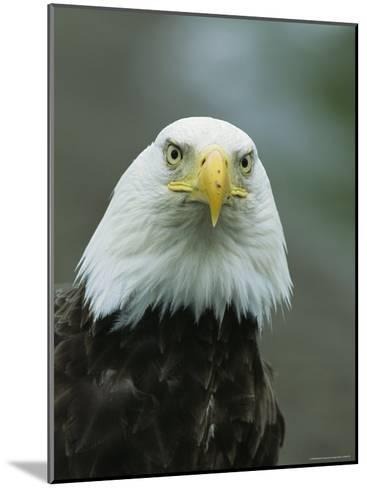 Close View of an American Bald Eagle-Tom Murphy-Mounted Photographic Print