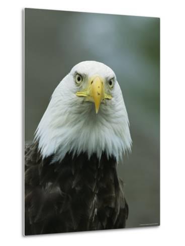 Close View of an American Bald Eagle-Tom Murphy-Metal Print
