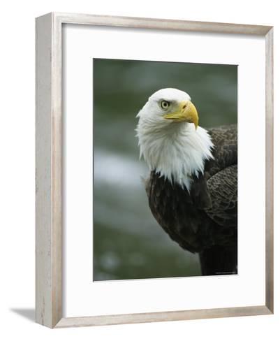 Close View of an American Bald Eagle-Tom Murphy-Framed Art Print