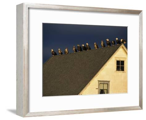 Row of American Bald Eagles Perched on a Rooftop-Tom Murphy-Framed Art Print