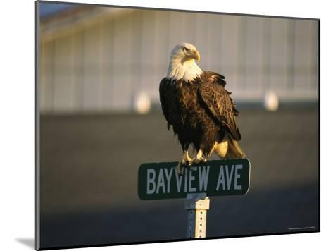 American Bald Eagle Perches on a Street Sign-Tom Murphy-Mounted Photographic Print