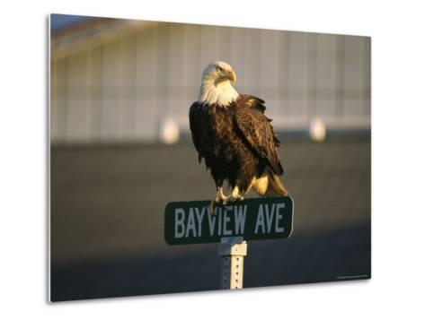 American Bald Eagle Perches on a Street Sign-Tom Murphy-Metal Print