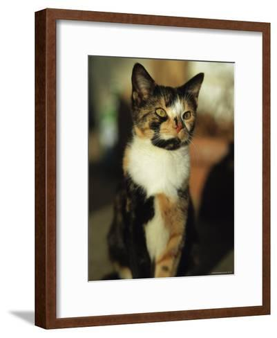 Portrait of a Calico Cat-Stephen Alvarez-Framed Art Print